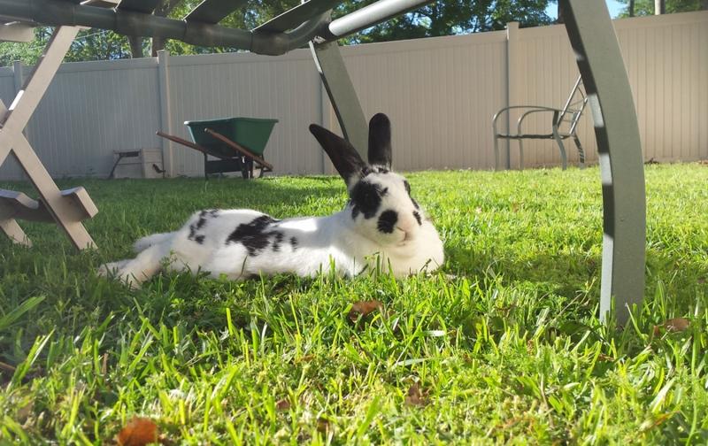 spring-bunny_Jasper