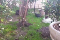 Garden Chillin