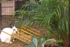Scenes from a Bunny Garden