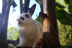 bunny bananas 2