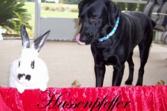 hausenfeffer copy