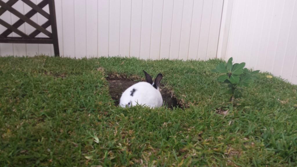 Bunny-Habitat-15